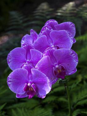 Tropical flower in Hawaii Botanical Garden, Big Island, Hawaii, orchid by Gayle Harper