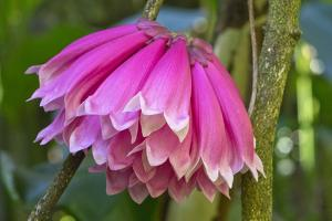 Tropical flower in Hawaii Botanical Garden, Big Island, Hawaii by Gayle Harper