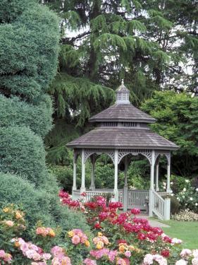 Gazebo and Roses in Bloom at the Woodland Park Zoo Rose Garden, Washington, USA