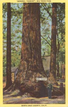 General Fremont, Big Tree, Santa Cruz, California
