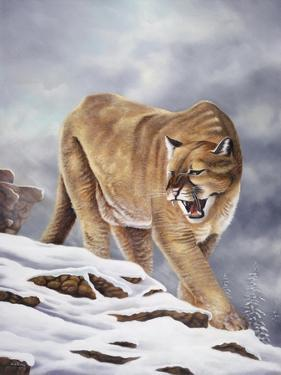 Cougar by Geno Peoples