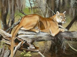 Florida Panther by Geno Peoples