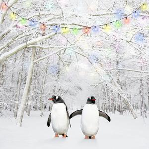 Gentoo Penguin in Winter Woodland with Snow