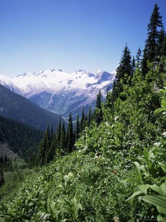 Bonney Range, Glacier National Park, Rocky Mountains, British Columbia, Canada