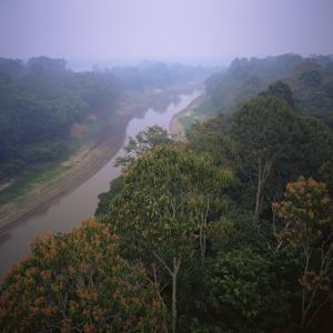 Morning Mists in Rio Negro Region of Amazon Rainforest, Amazonas State, Brazil, South America by Geoff Renner