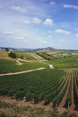 Vineyards, Loire Valley and Sancerre in the Distance, France by Geoff Renner