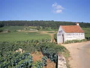 Vineyards on Route Des Grands Crus, Nuits St. Georges, Dijon, Burgundy, France by Geoff Renner