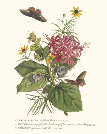 Ceratocephamus, Martynia and Narcissus