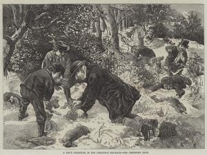 A Day's Ferreting in the Christmas Holidays by George Bouverie Goddard