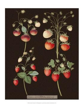 Brookshaw Strawberries by George Brookshaw