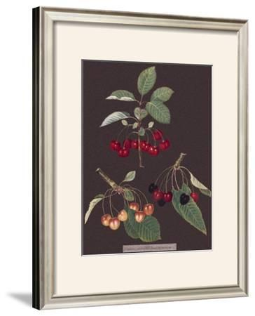 Cherries by George Brookshaw