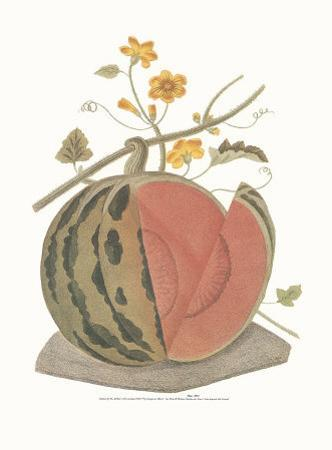 Melon by George Brookshaw