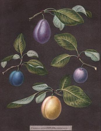 Plums by George Brookshaw