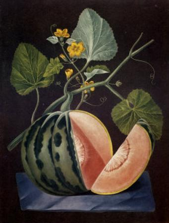 Polinac Melon by George Brookshaw