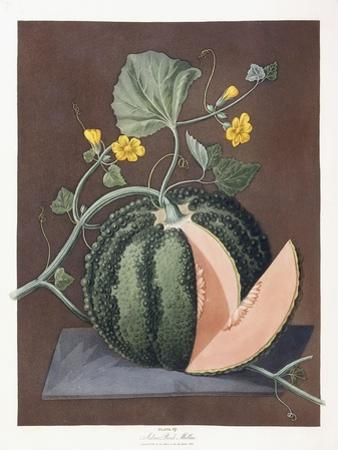 Silver Rock Melon, 1812 by George Brookshaw