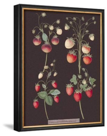 Strawberries by George Brookshaw