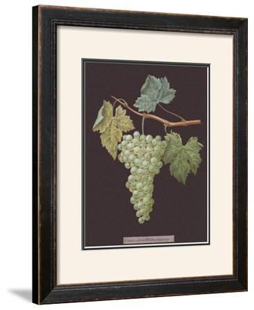 White Grapes by George Brookshaw