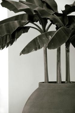 Banana Trees by George Cannon