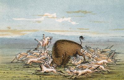 Bison and Coyotes by George Catlin