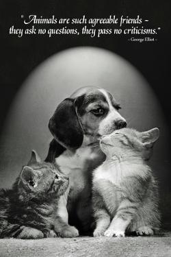 George Elliot Animals Quote Poster
