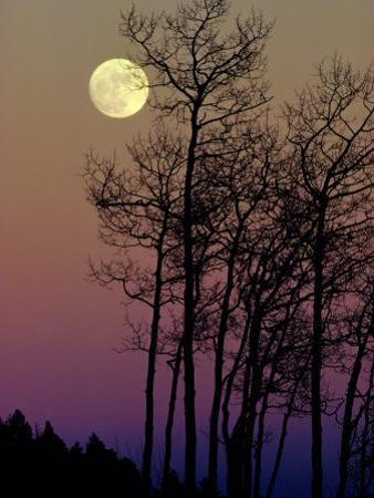 A Full Moon Shines on Winters Leafless Branches