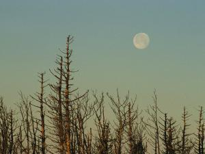 The Moon Rises Above Trees Along the Tennessee/North Carolina Border by George F. Mobley