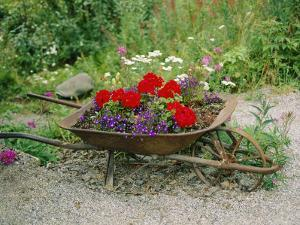 View of an Old Wheelbarrow Used for Summer Flowers by George F. Mobley