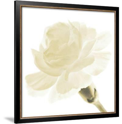 Carnation I