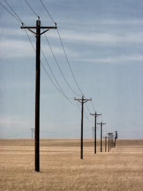 A Line of Telephone Poles Traveling over Golden Grassland by George Grall