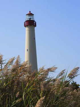 Cape May Lighthouse and Reeds Bending in a Gentle Breeze by George Grall