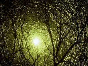 Interlaced Icy Branches Frame the Sun by George Grall
