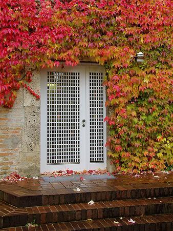 Augustine Door and Ivy