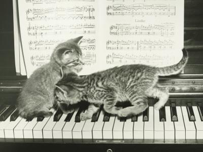 Two Kitten Playing on Piano Keyboard by George Marks