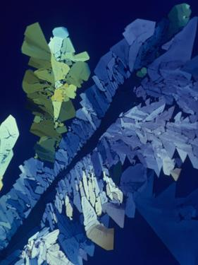 Tartaric Acid Crystals Viewed with Polarized Light by George Musil