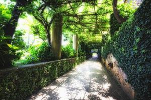 Arbor Path, Ravello, Italy by George Oze