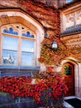 Autumn Ivy Princeton University New Jersey by George Oze