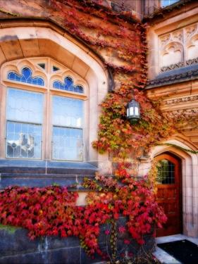 Autumn Ivy Princeton University New Jersey by George Oze