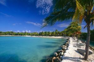 Blue Lagoon With Palm Trees, Aruba by George Oze