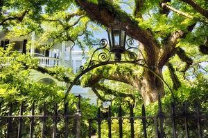 Charleston Villa Garden With Live Oak Tree by George Oze