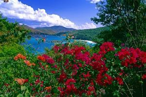 Colorful Caribbean View, St John, Virgin Islands by George Oze