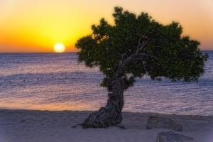 Eagle Beach Sunset witha Divi Tree, Aruba by George Oze