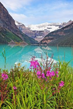 Fireweed at Lakeside, Lake Louise, Canada by George Oze
