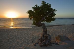 Fofoti Divi Tree at Sunset Aruba by George Oze