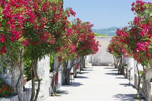 Garden Bloom, Villa Rufulo, Ravello, Italy by George Oze