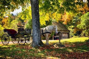 Horse-drawn Carrieage Under A Tree by George Oze
