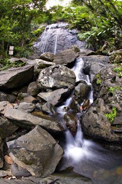 La Coca Waterfall, Puerto Rico by George Oze