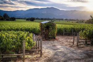 Little Shed, Napa Valley, California by George Oze