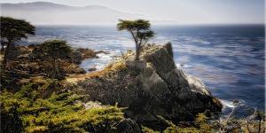Lone Cypress Tree by George Oze