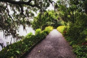Low Country Walking Path, Charleston,SC by George Oze