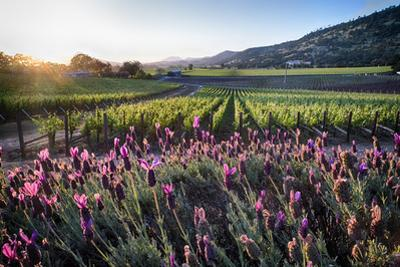 Napa Valley Spring Afternoon by George Oze
